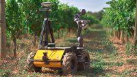 robot-grape