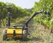 robot vinicola grape