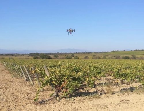 Eurecat will trial the use of drones for monitoring vineyards
