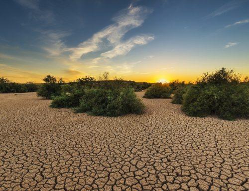 La Inteligencia Artificial ayudará a la preservación del planeta